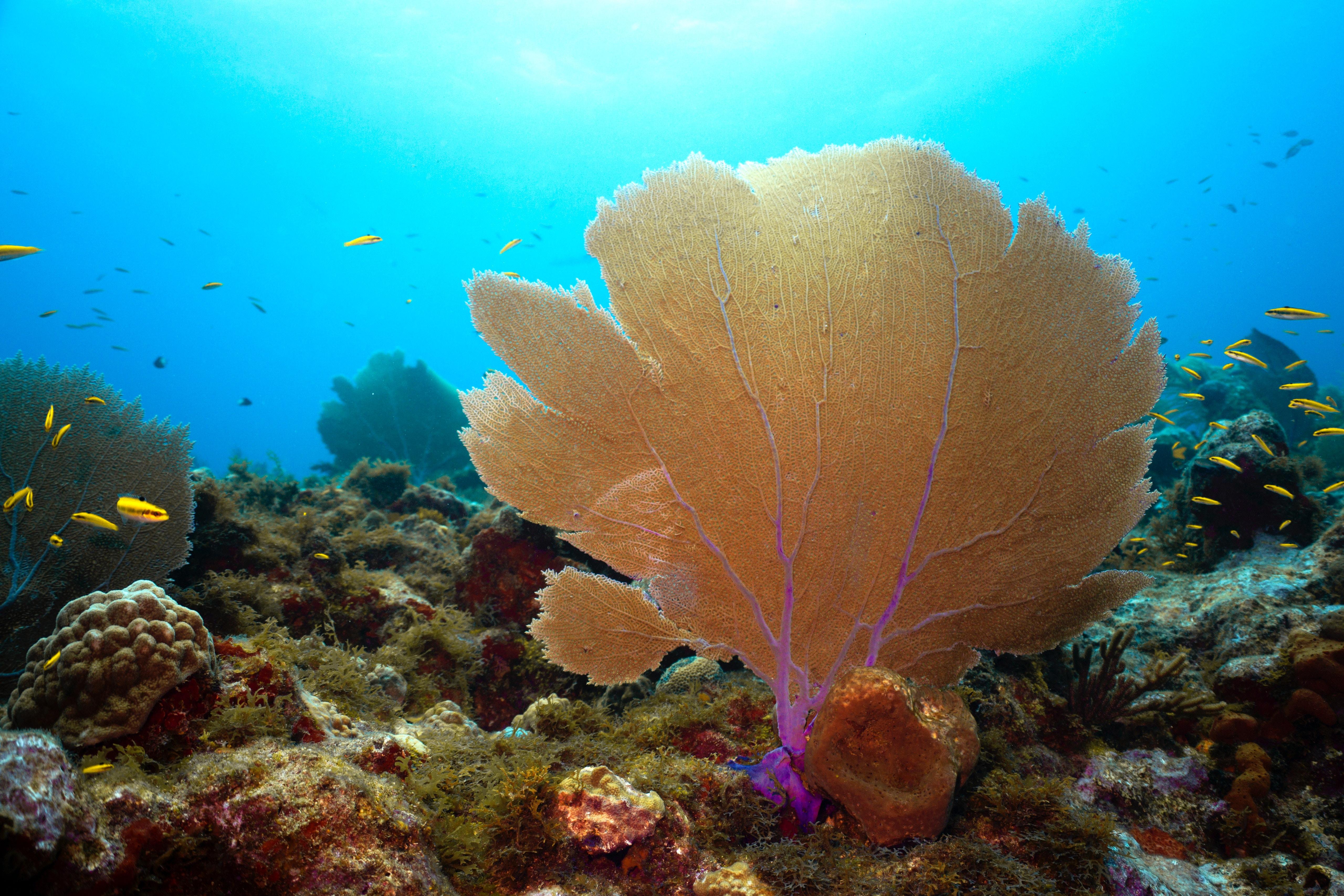 Imagen de fondo marino del proyecto Life IP Intemares en el que dinamia realiza la evaluación y seguimiento del impacto socioeconómico